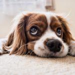 crocchette cane